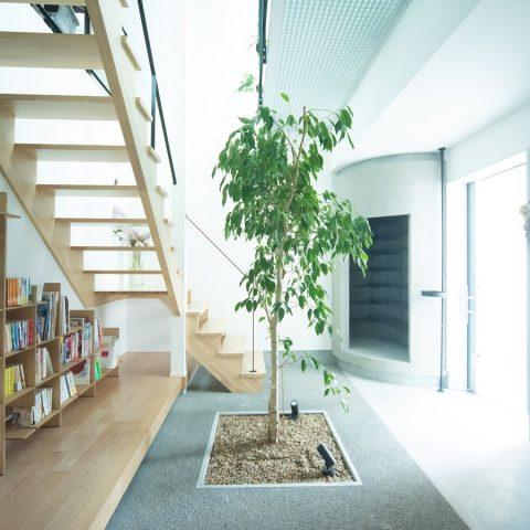 木と共生する家